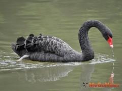 房市黑天鵝