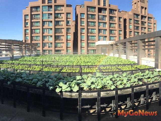 新北泰山 香草綠屋頂,養生地景共享樂